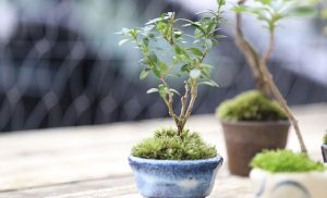 手のひらサイズのmyお庭 「まめ盆栽の魅力」【1st day】